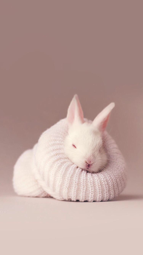 Snuggly Bunny Rabbit Iphone Wallpaper Rabbit Wallpaper Cute