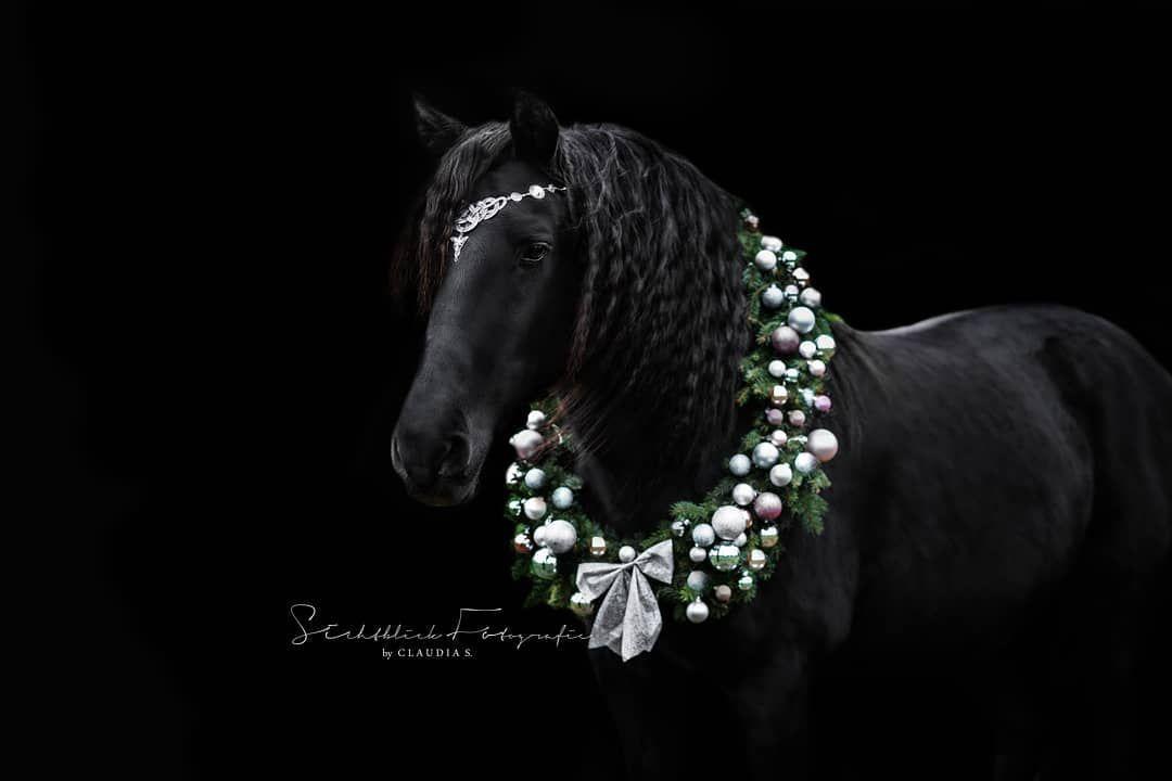 """Sichtblick Fotografie on Instagram: """"Ich wünsche Euch allen einen schönen 3. Advent! ???♀️ ?️?️?️ .  #Pferdefotograf #pferdefotografie #horse#horses#horseofinstagram…"""""""