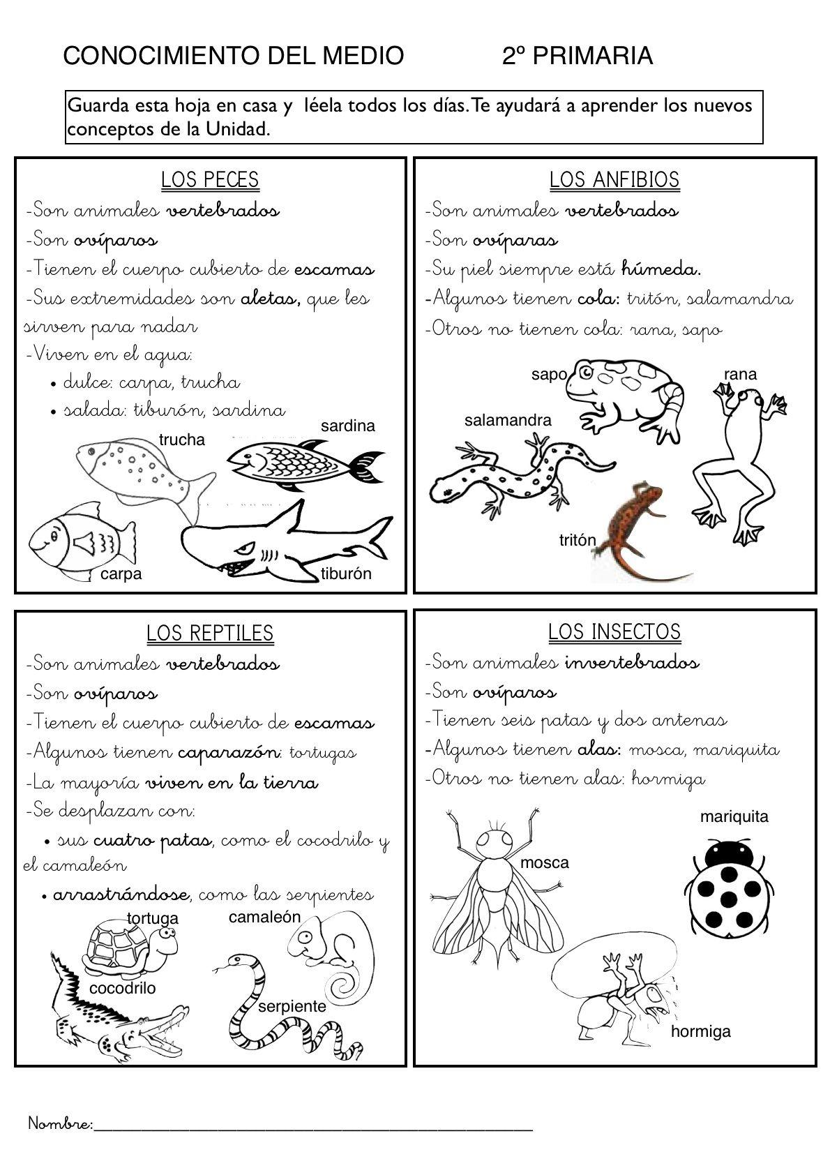 Los animales aprendizaje pinterest spanish animal - Como eliminar a los mosquitos de mi cuarto ...