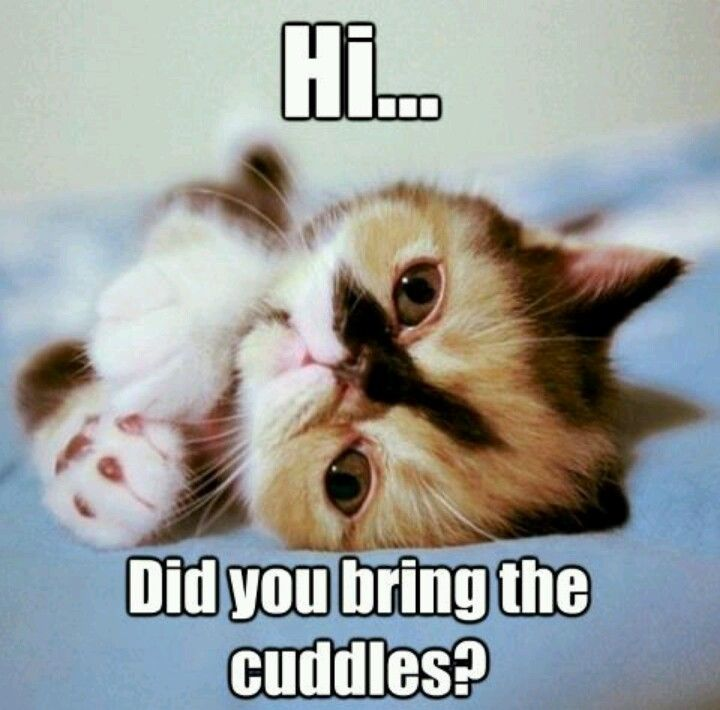 Pin By Maddie Arthir On Cute Animals Cute Baby Animals Kittens Cutest Cute Animals