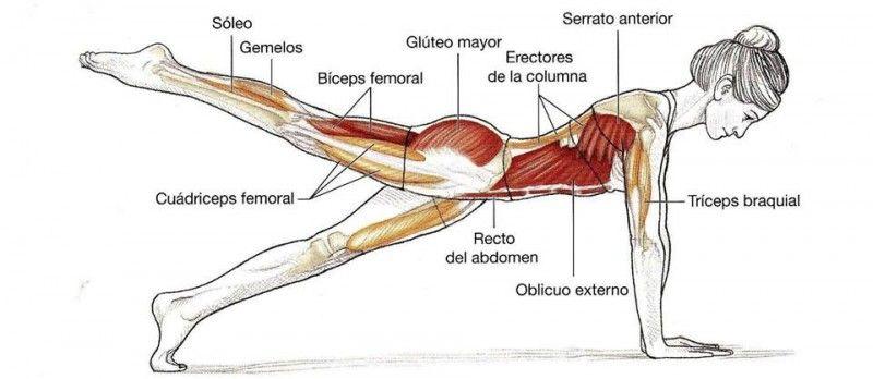Anatomia Muscular Espalda Buscar Con Google Pilates En