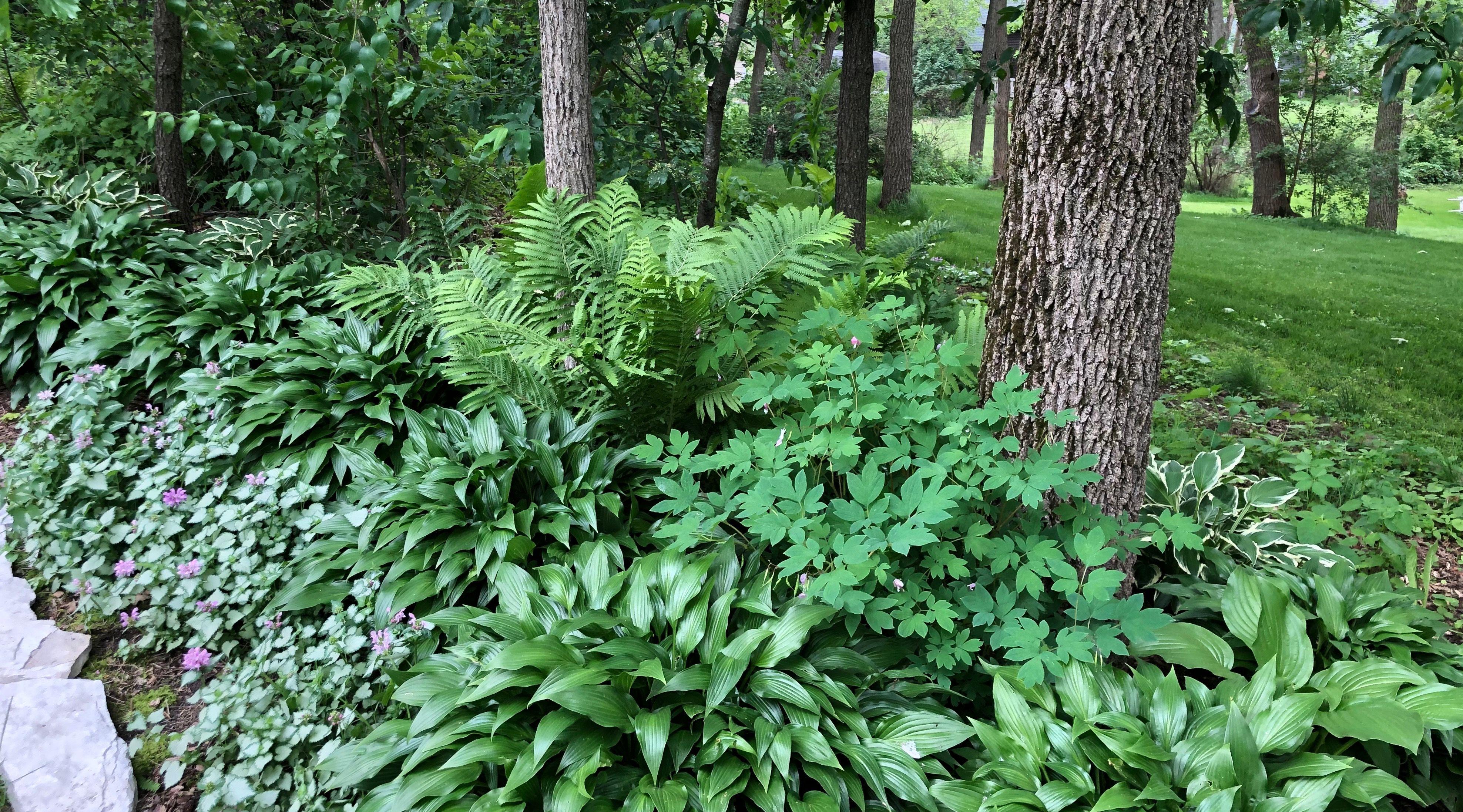 Woodland shade border. Zone 5   Garden, Plants, Outdoor