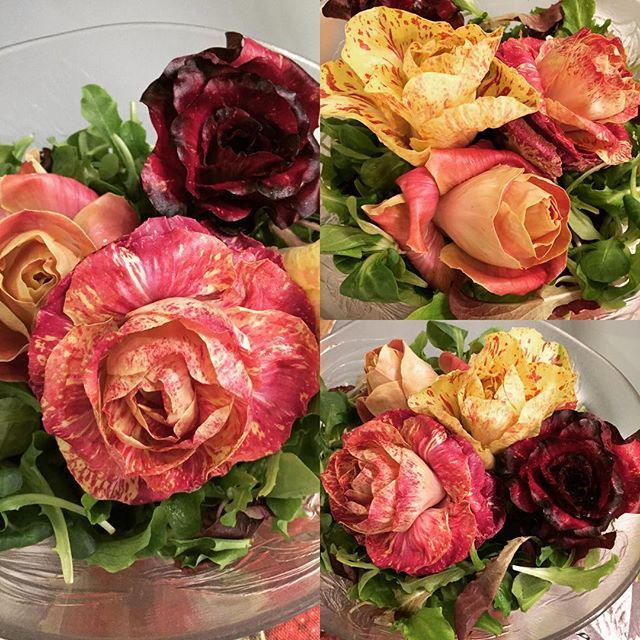 Rosa Di Gorizia a beautiful local sweet tender radicchio!! #salad #vegetarian #italy #fvg #foodie #food #bestoftrieste