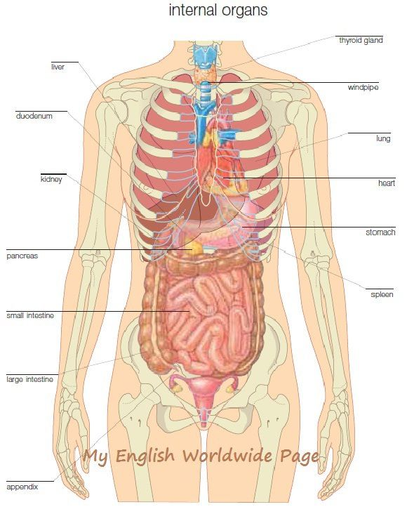 Teaching Human Body Systems To First Graders New Teaching Era