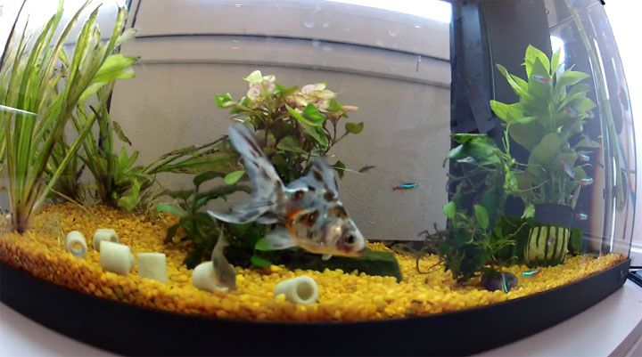 Peceras decoradas con peces buscar con google peceras - Peceras pequenas decoradas ...