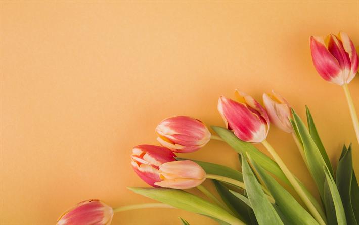 Scarica Sfondi Tulipani Rosa Fiori Di Primavera Primavera Sfondo