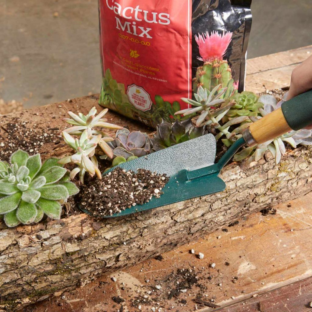 How To Make A Wood Log Planter For Succulents In 2020