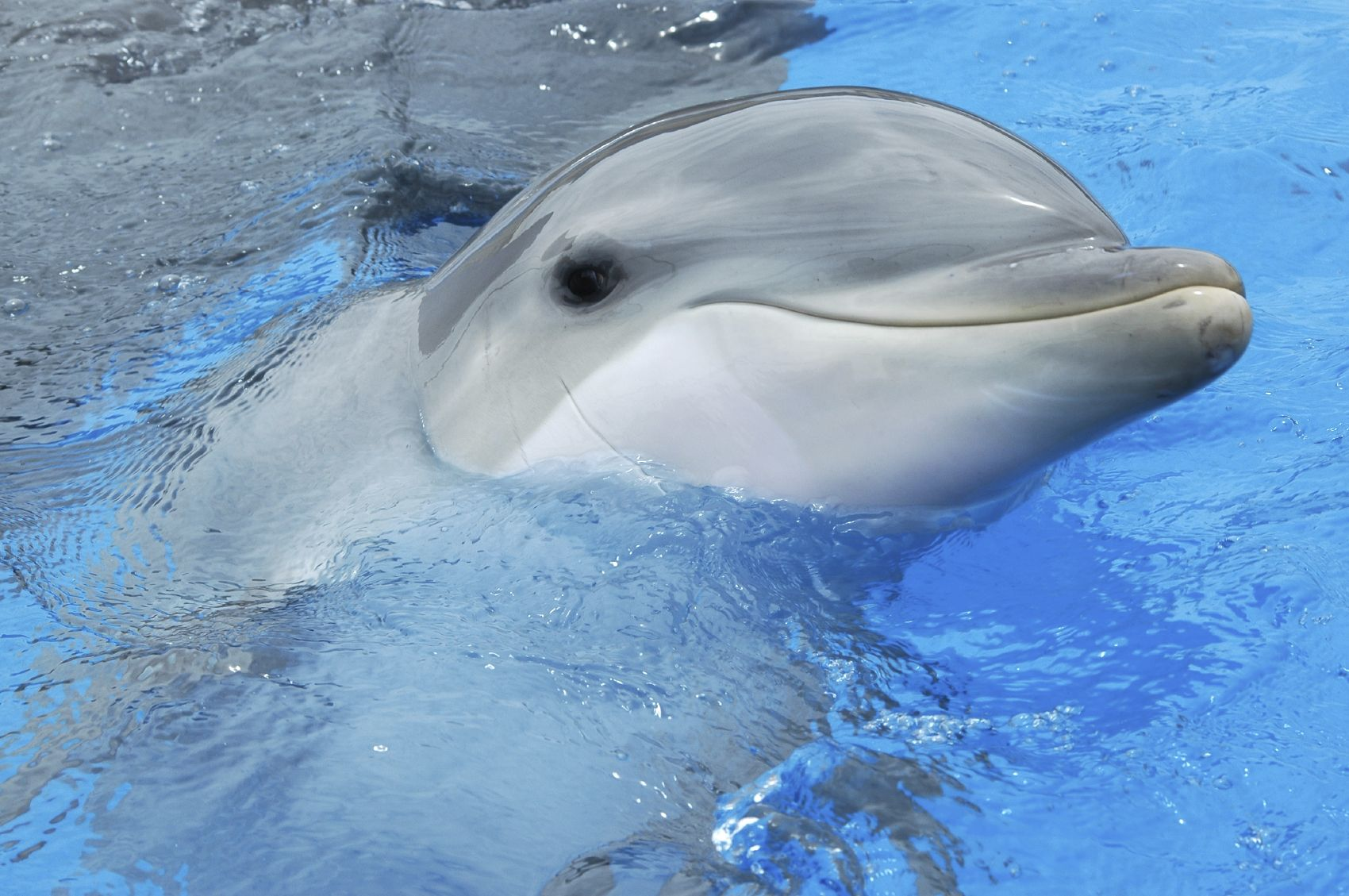 Bottlenose Dolphin Animals Dolphins Animal Groups