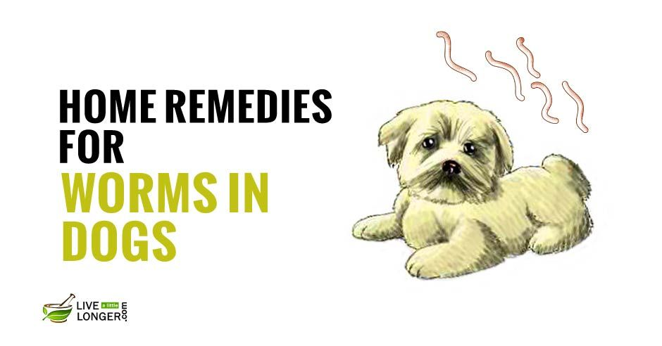 7 Awesome Remedies For Itchy Dog Skin Relief Itchy Dog Pet Care