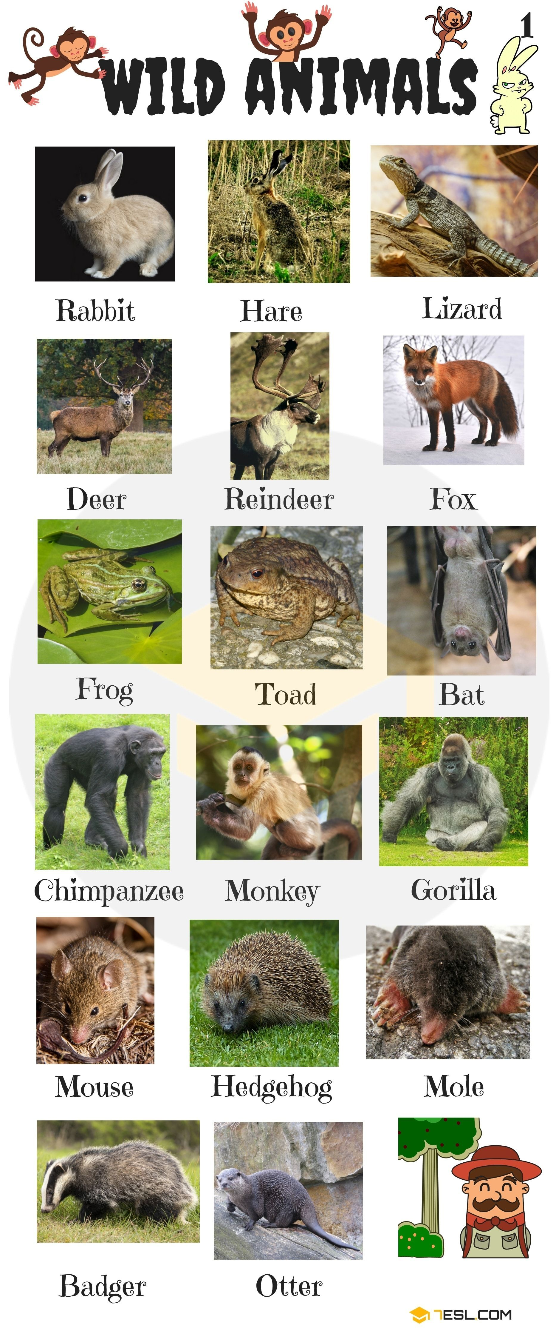 Animal Names Types Of Animals With List Pictures Wildanimals Animals Vocabulary In English Learn A Wild Animals List Animals Wild Animals Name In English