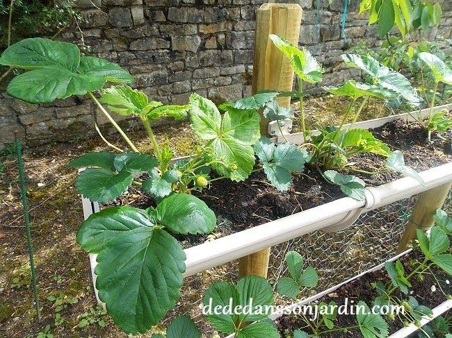 comment faire pousser des fraises en hauteur d d dans son jardin jardin pinterest. Black Bedroom Furniture Sets. Home Design Ideas