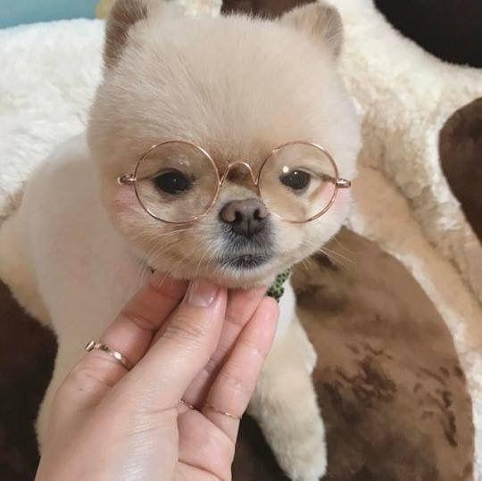 Do Not Remove Label Corgi Funny Corgi Cute Dog Memes