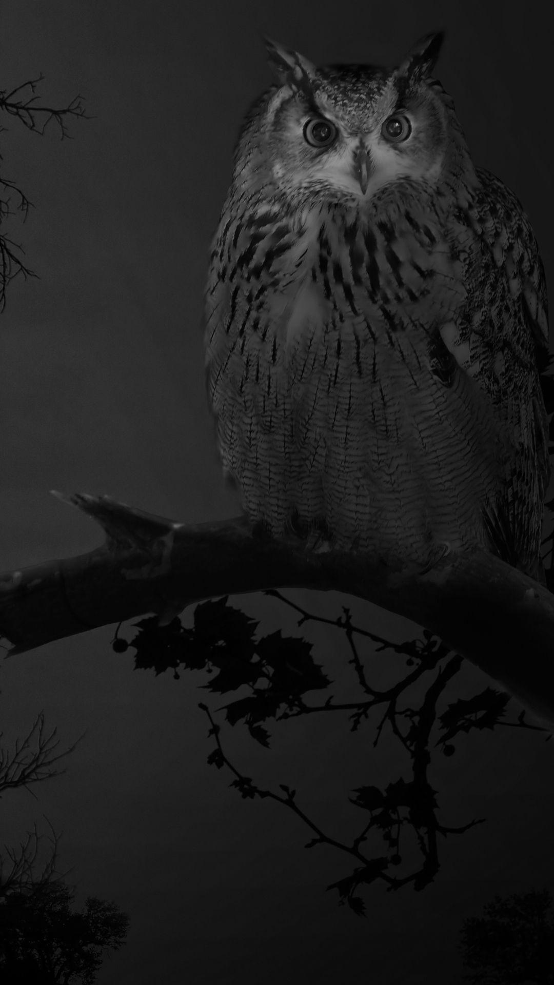 Photo of Owl Iphone Hintergrund – Owl Iphone Hintergrund #Owl #Iphone #Background – #back …