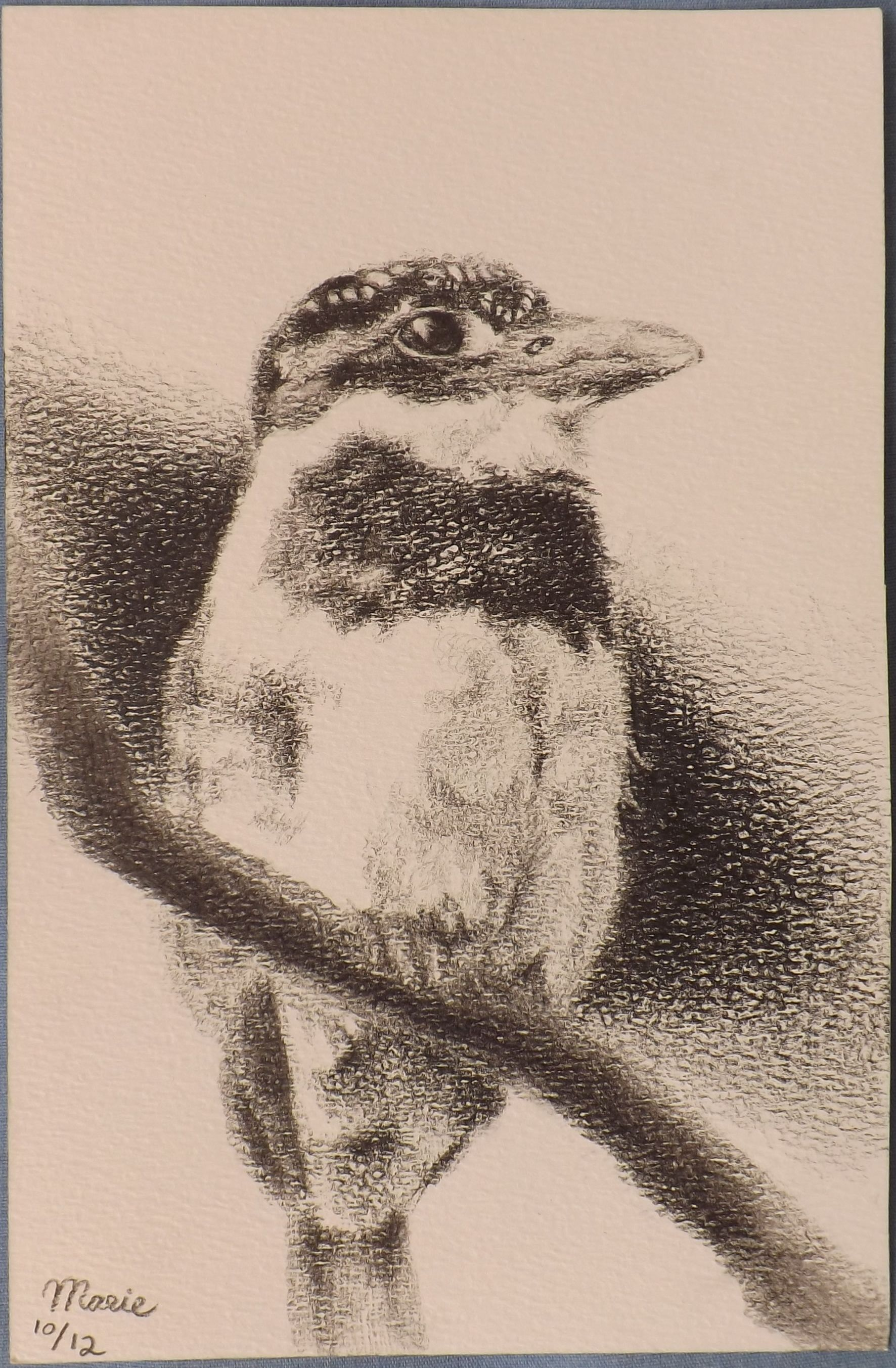 Pied Puffbird  Pencil on Paper 5.5 x 8.5''   Marie E. De Janón