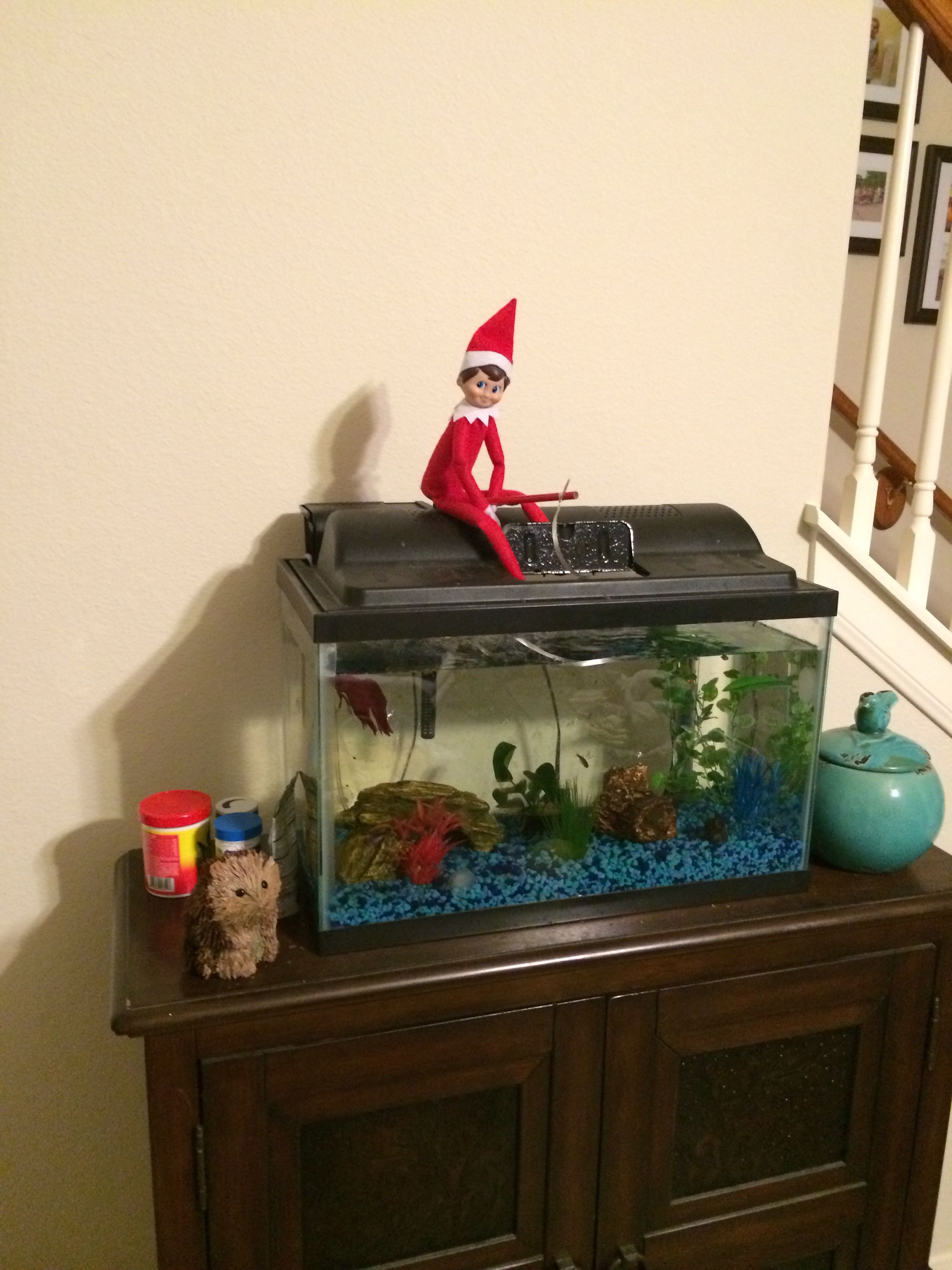 Elf on the Shelf, gone fishing!