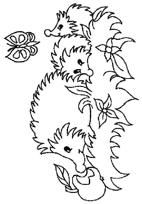 Hedgehogs!   Coloring   Pinterest   Colorear, Mandalas y Molde