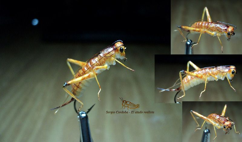 Cricket sergio cordoba fly tying pinterest cordoba for Fishing with crickets