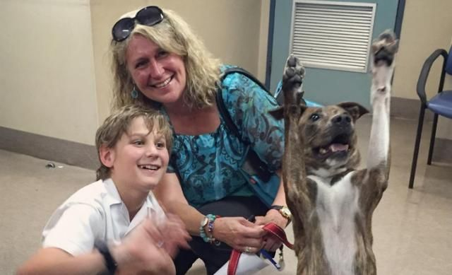 """Recently Adopted Dog Takes Best """"Adoption Photo"""" Ever"""