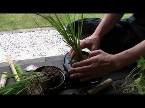 japanese kokedama pinterest pflanzen. Black Bedroom Furniture Sets. Home Design Ideas
