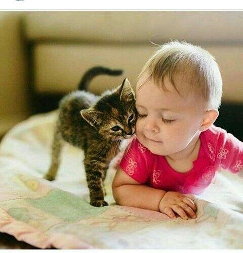Pin Von Almina Auf Merhamet Duygusu Katzen Tiere Und Bezaubernde Katzchen