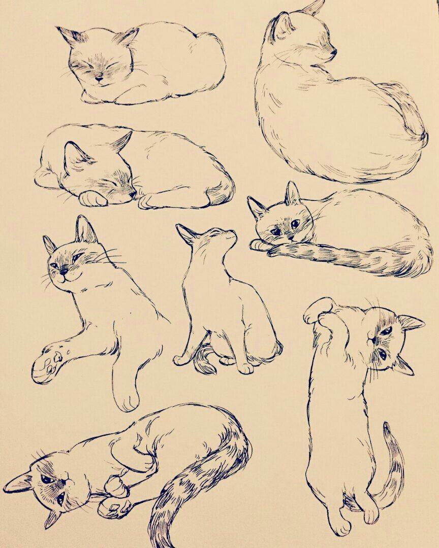 лет картинки рисунки в движении животные набросок заливном пироге качестве