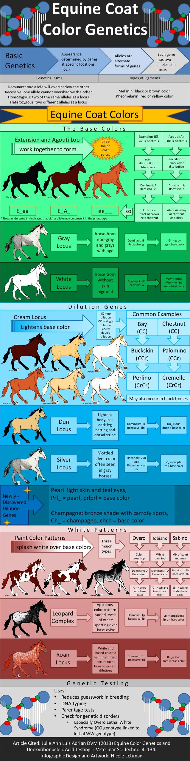 Equine coat color genetics genetics terms types of pigments equine coat color genetics genetics terms types of pigments dominant one allele will overshadow the nvjuhfo Choice Image