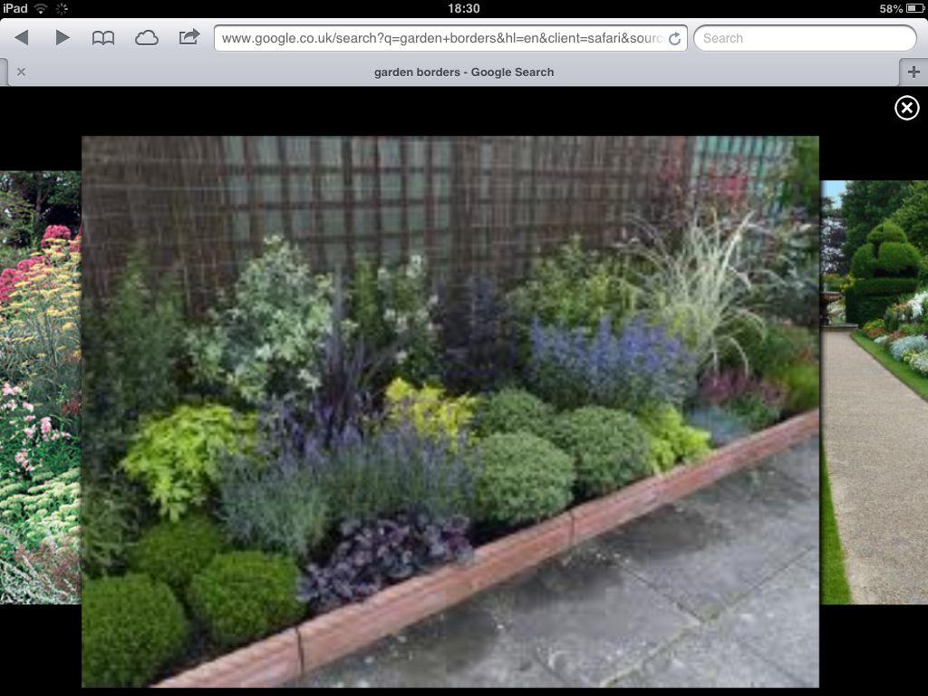 Evergreen shady border garden ideas pinterest evergreen