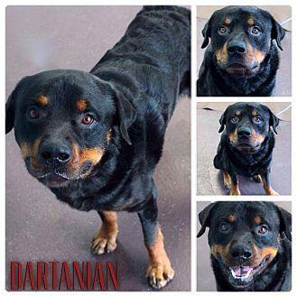Garden City Mi Rottweiler Mix Meet Dartanian A Dog For