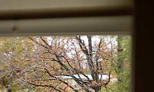 Weatherstripping and caulking your house: What you need to know - Kudzu.com