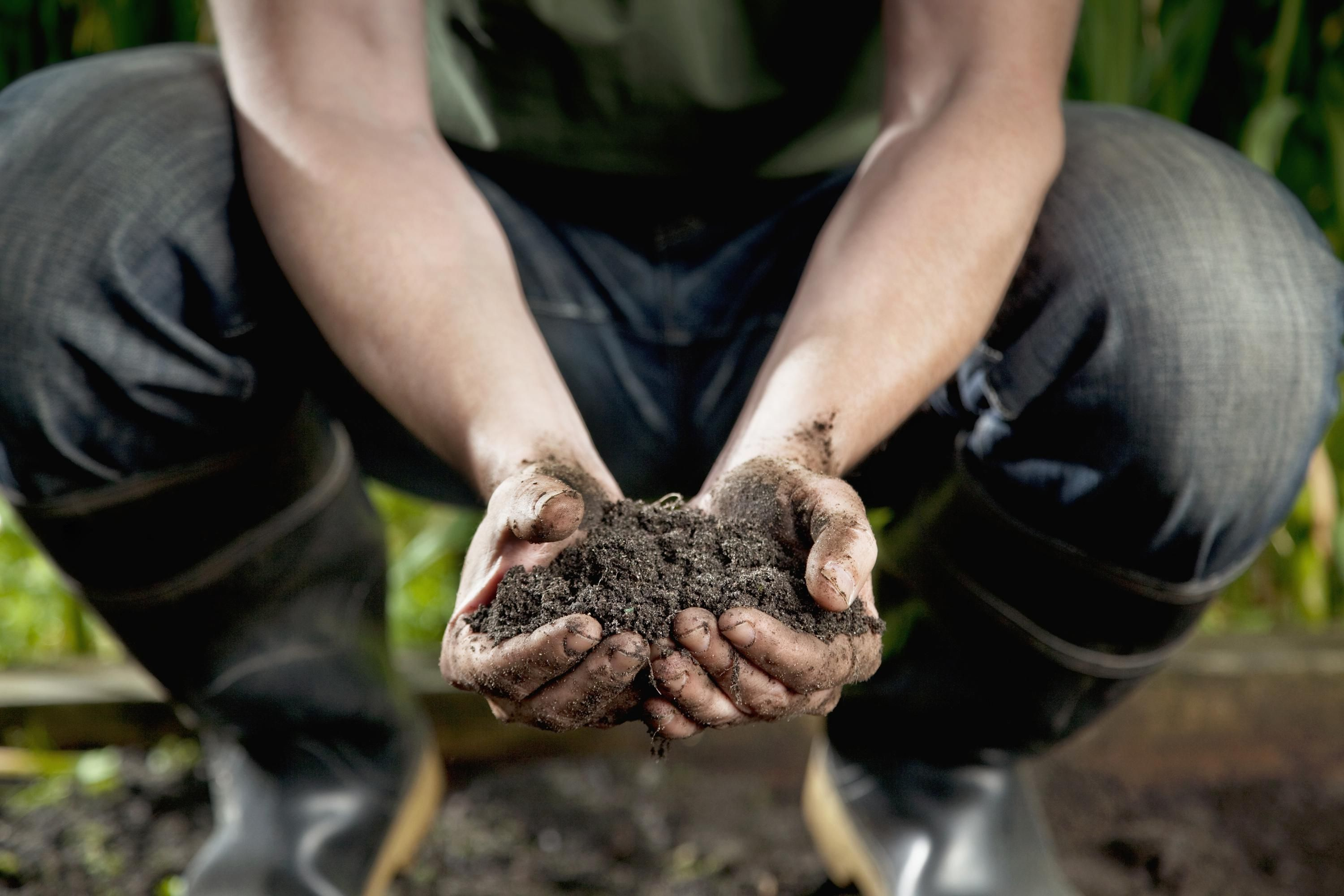 Test the Acidity of Your Soil Without a Pricey Kit