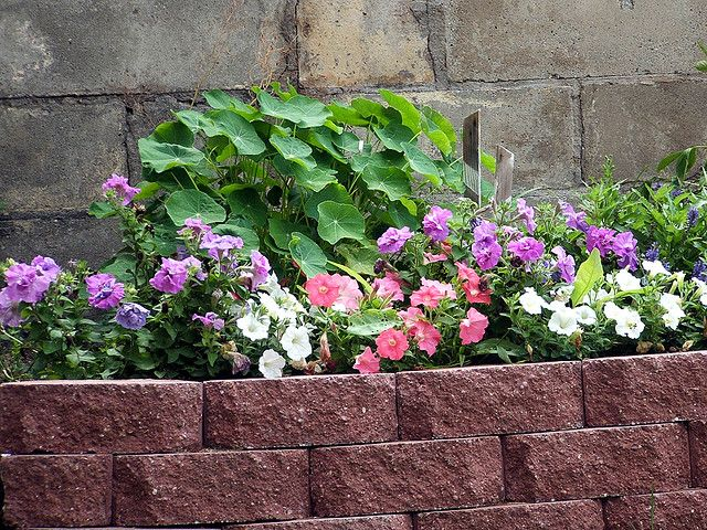 garden border ideas garden edging ideas creating beautiful borders