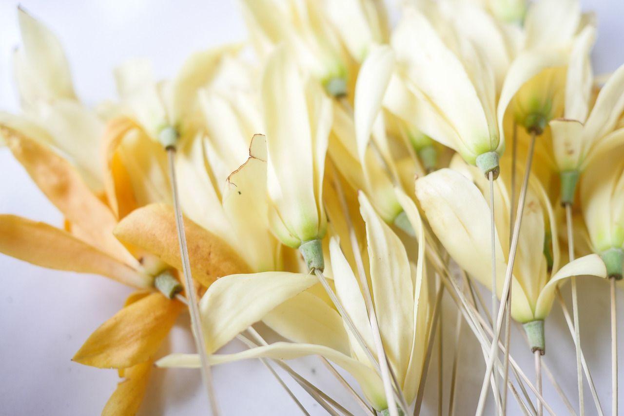 A beautiful balinese flower often put in the hair or behind the a beautiful balinese flower often put in the hair or behind the ear vpbali culture traditional bali izmirmasajfo