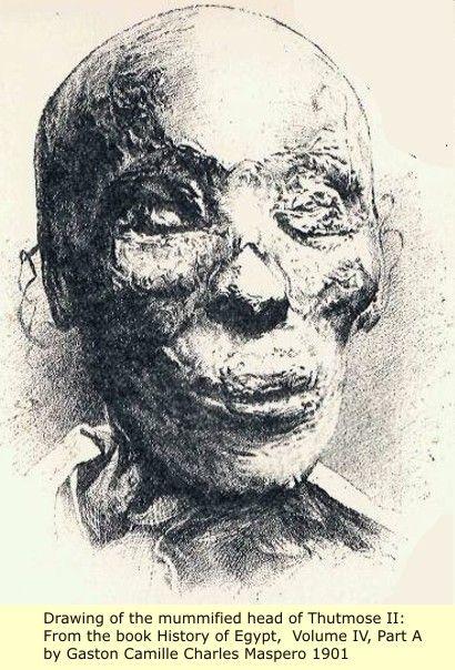 Desenho da Múmia de Tutmés II - Tuthmose II ...