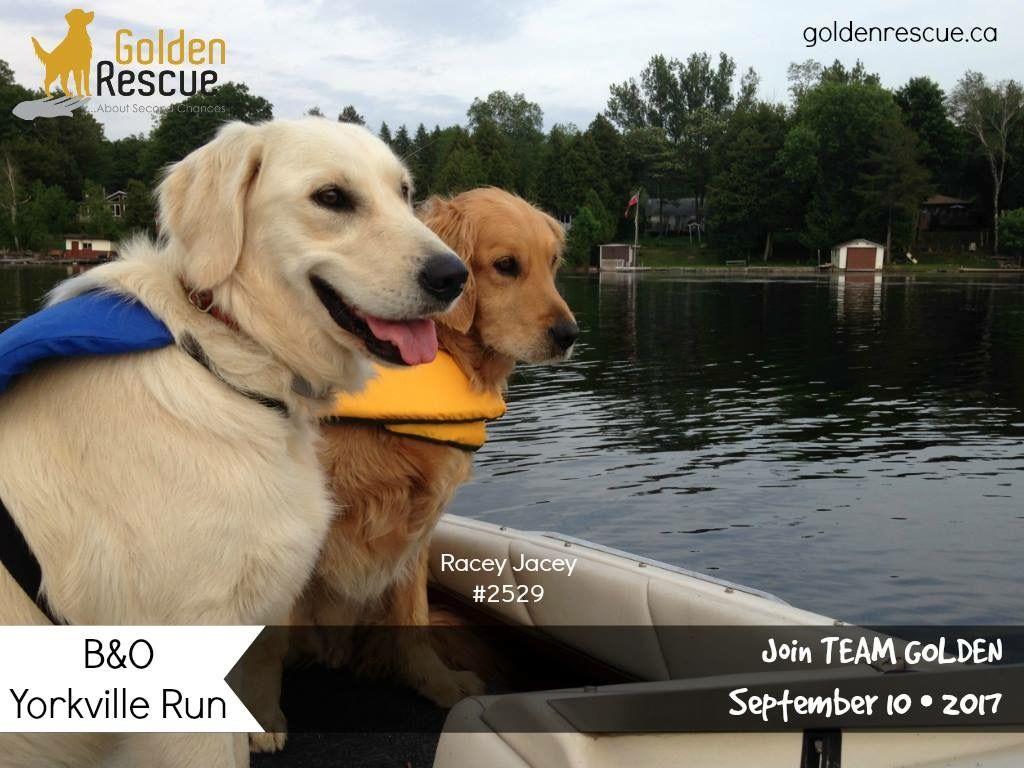 Pin Von Golden Rescue Auf Golden Events Golden Events Dogs Und Pup