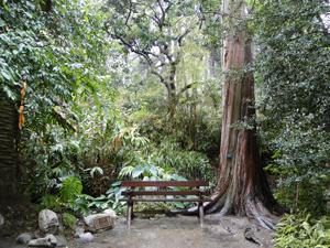 Ucla Mildred E Mathias Botanical Garden