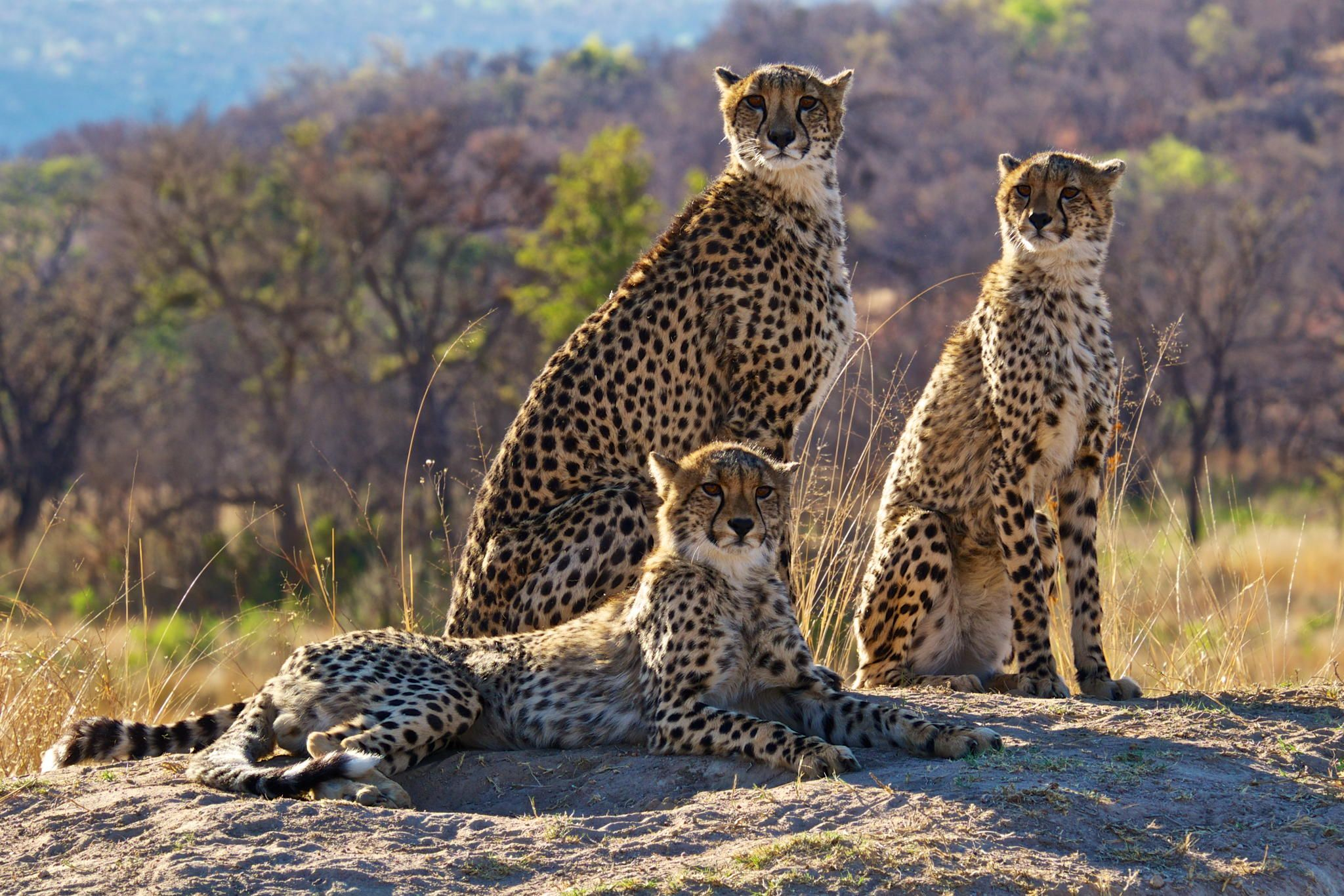 Family+Portrait+by+Robert+Bolton+on+500px WILD LIFE