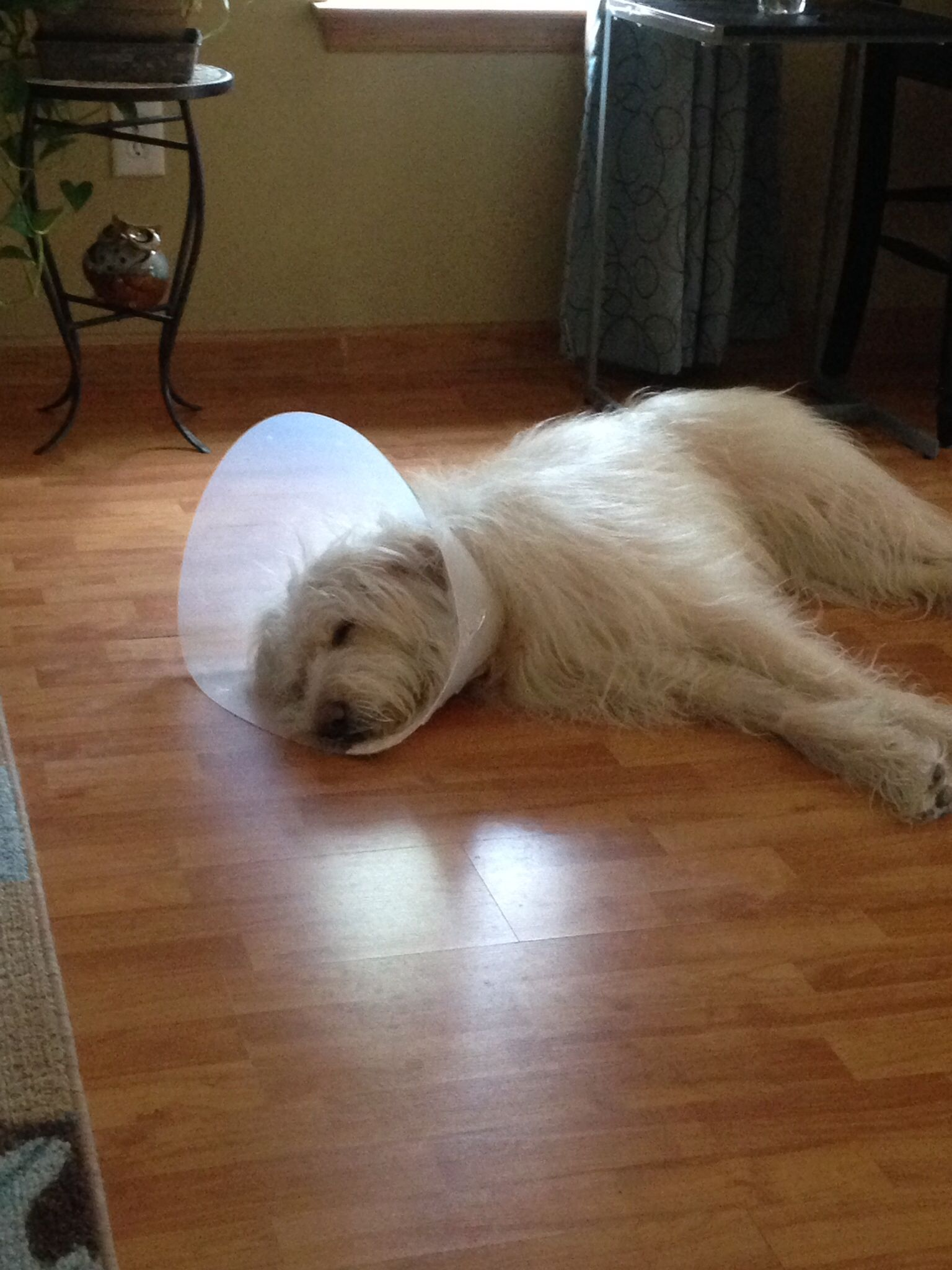 Poor cone head Brisco, recuperating after cyst removal