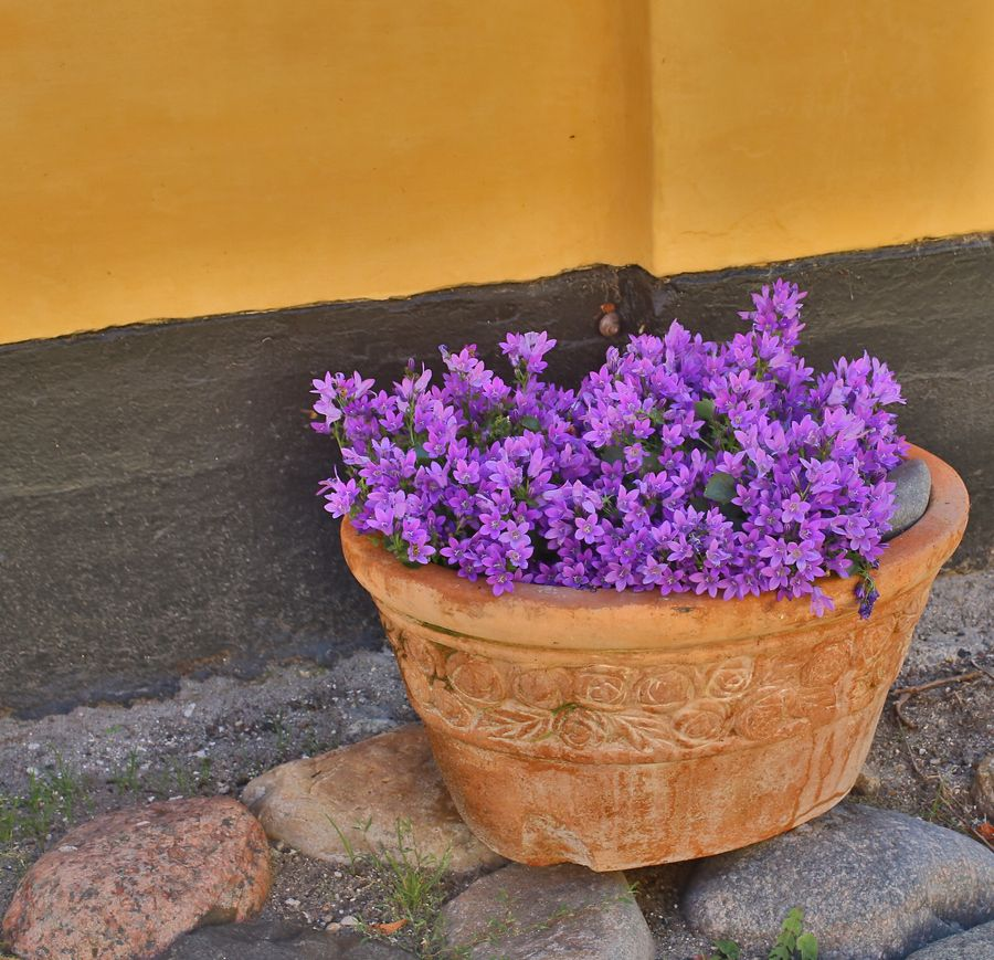 A roadside flower arrangement in the lovely seaside town of Dragor, Denmark.
