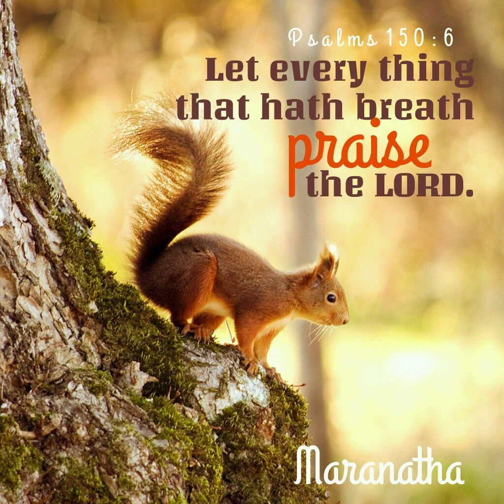 Psalms 150:1-6 (KJV) Let every thing that hath breath praise the ...