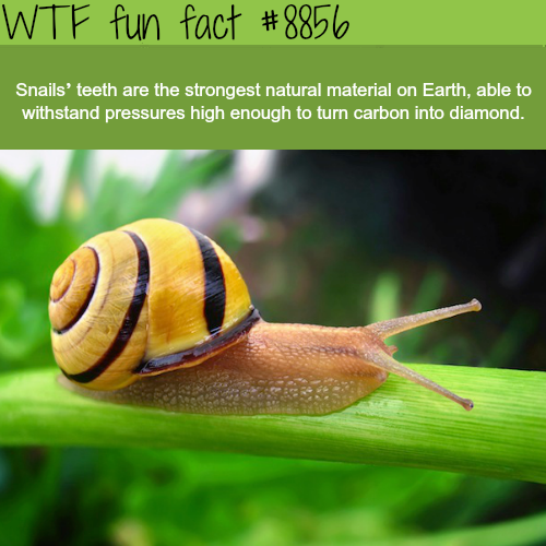 20 WTF FACTS IN YOUR FACE THAT WILL FRY YOUR BRAIN | FACTS