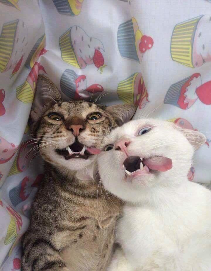 Meowfieee Zoom Animals Meowfieee Https Putmelike Com Meowfieee Tiere Susse Katzen Bilder Katzen