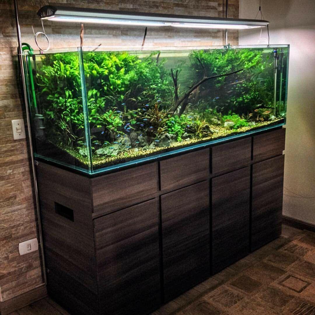 50 aquascape aquarium design ideas aquariums aquarium for Wooden fish tank
