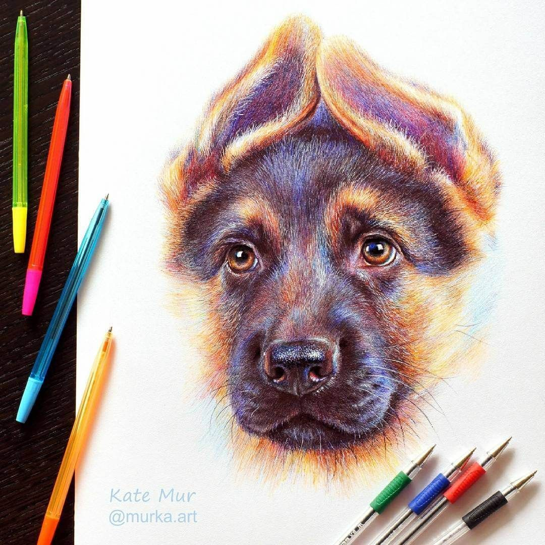 German Shepherd. Animal Art with Pencil Ballpoint Pen and Paint. Click the image to see more of Kate Mur's work.