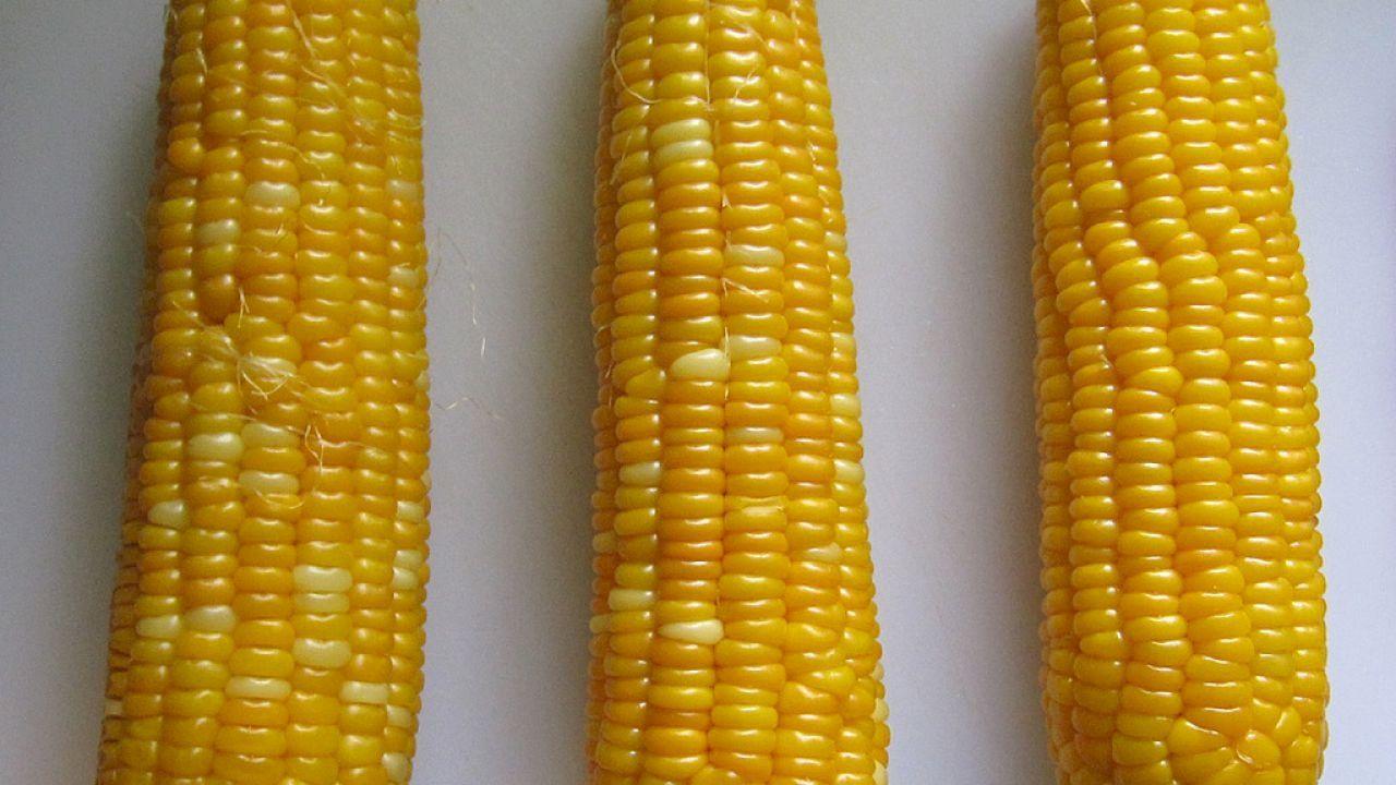 طريقة سلق الذرة الصفراء Corn Yellow Corn Boiling