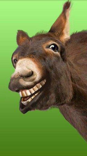 Laughing Donkey | Other dimensions? | Donkey, Animals, The ...