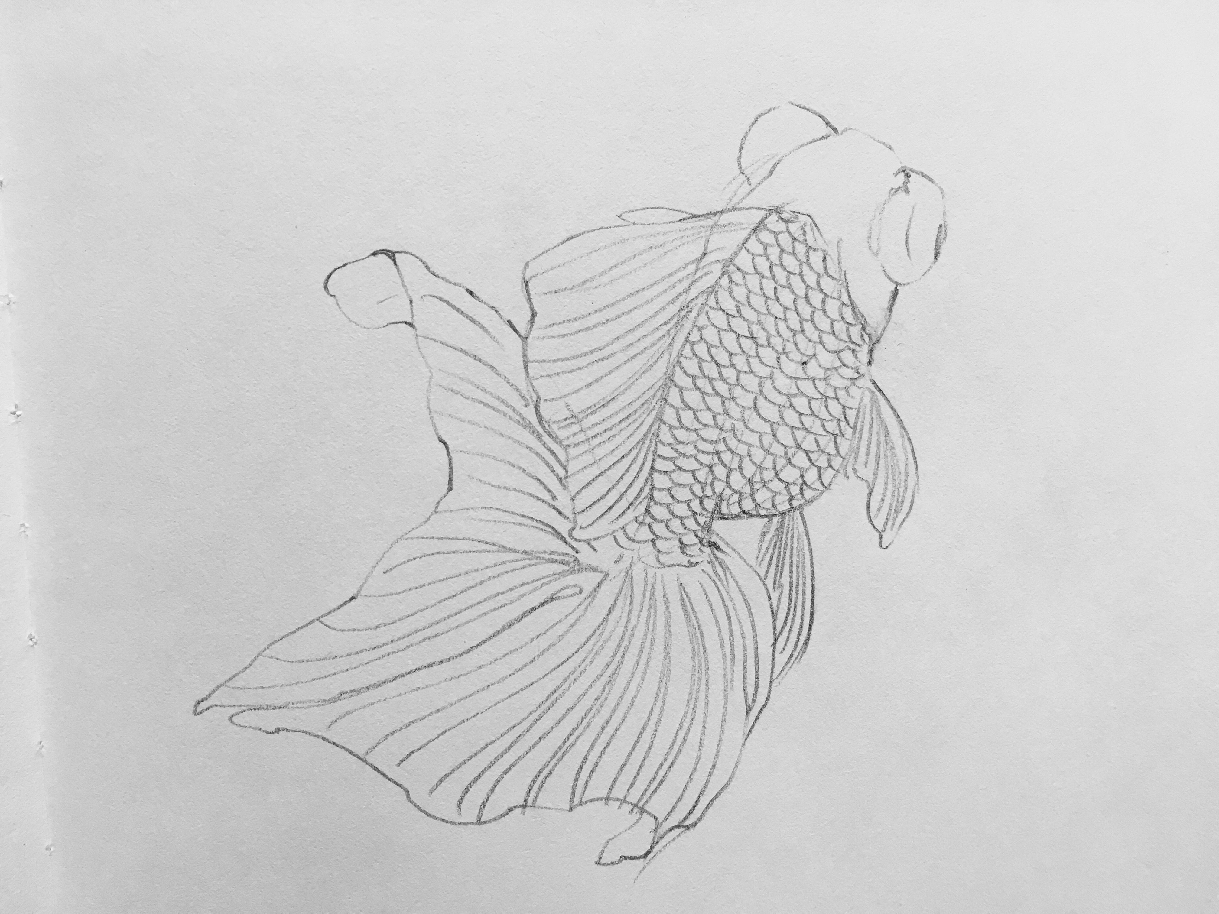 Uncategorized Goldfish Drawings pin by on gold fish pinterest goldfish and drawings care art tank water fairy inspiring artsy fartsy