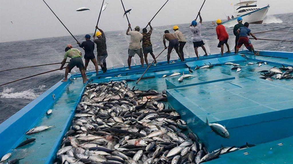 الرئيسية أسماك العرب Sustainable Fishing Fishing Techniques Fishing Equipment