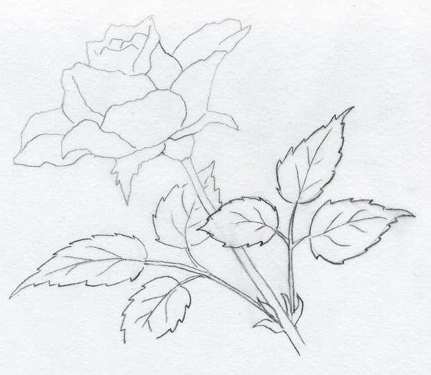 rose-drawings01.jpg (620×540) | Roses drawing, Drawings, Pencil ...