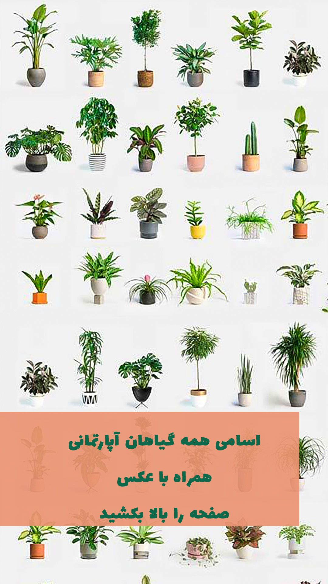 140 گیاه آپارتمانی با عکس فهرست الفبایی گیاهان خانگی Types Of Plants Free Phone Wallpaper Abstract Iphone Wallpaper
