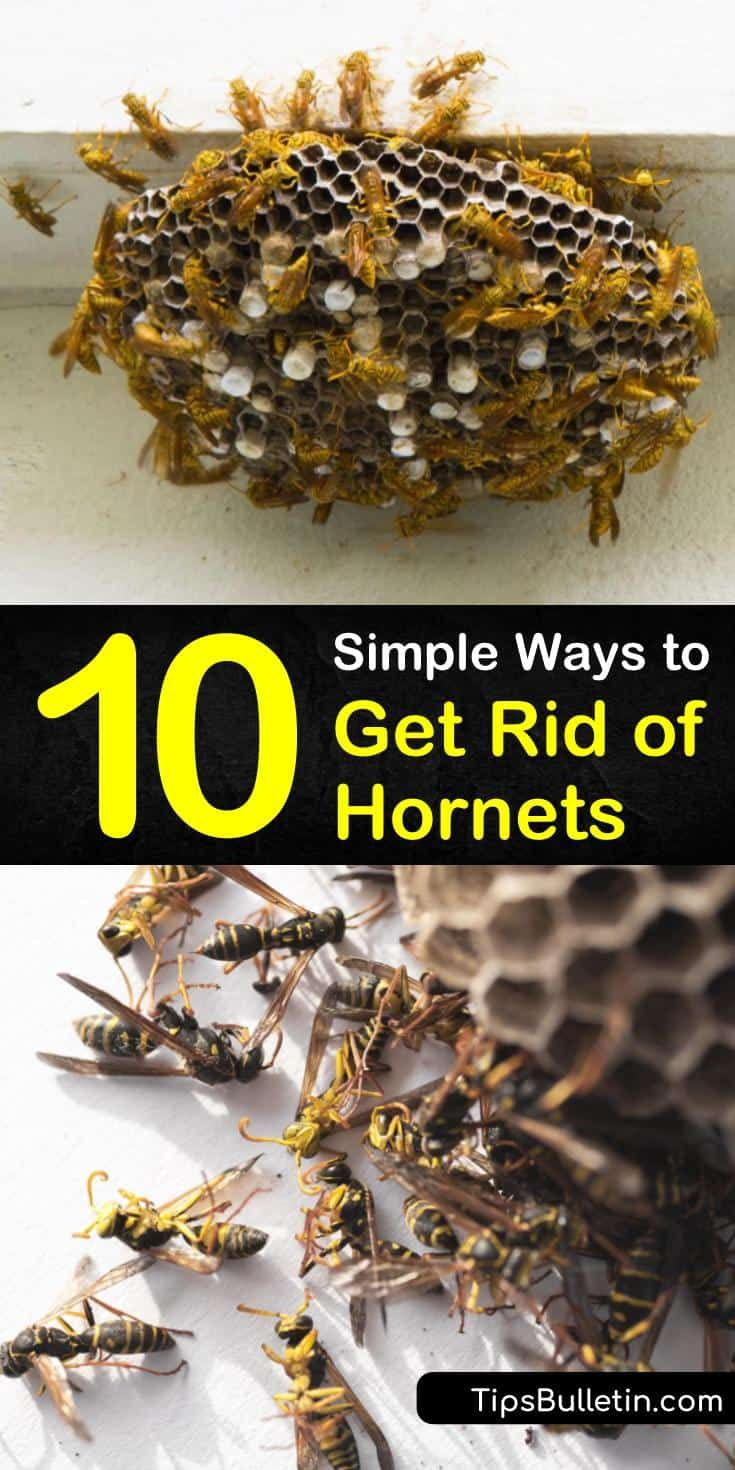 how to get rid of bees nest in roof